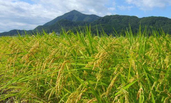 持続可能な循環型農業とは